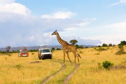 Afrika-Urlaub - Jeepsafari