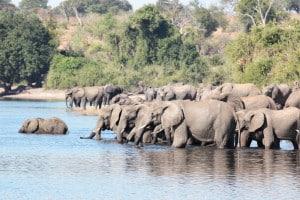 Botswana Reisen - Gruppenreise
