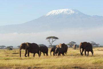Afrika Reisen - Safaris - Rundreisen - Urlaub in Afrika