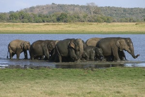 Reisen in Sri Lanka - Elefanten Safari