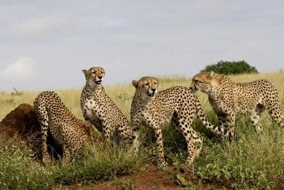 Safari Reise in Südafrika - Gruppenreise