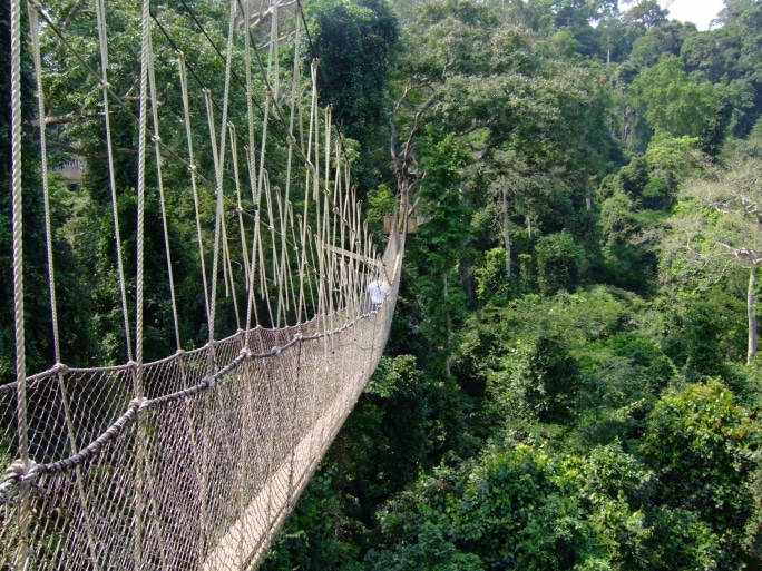 Ghana Rundreisen - Canopy Wandern