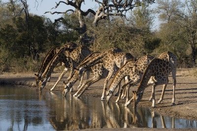 Südafrika Rundreisen - in kleinen Gruppen