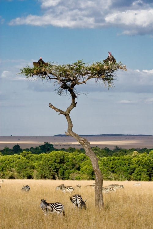 Savannenlandschaft - Afrika-Reisen