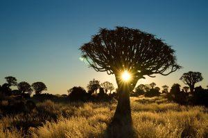Namibia Rundreisen - Safari Erlebnisreise