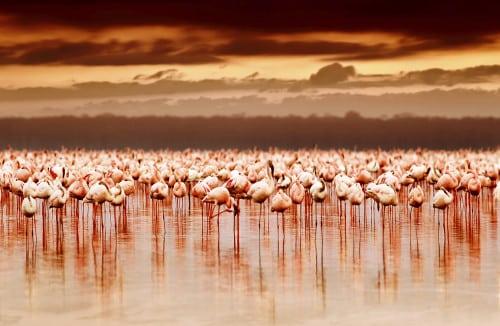 Fotosafari und Vogelbeobachtungen in Afrika