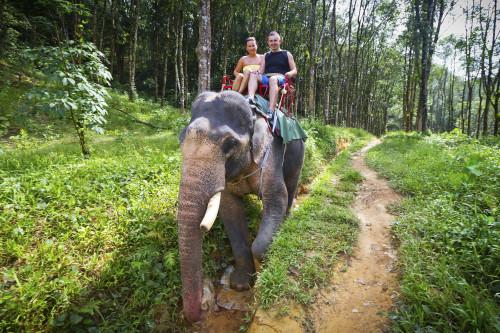 Safari in Asien