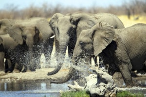 Safari Reise Namibia - Tour