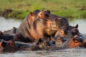 Rundreisen in Botswana - Chobe