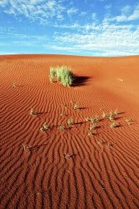 Namibia-Safari-Reisen