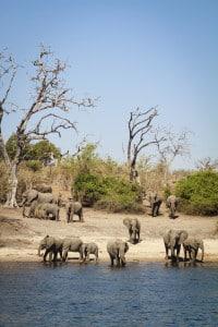 Elefanten Safari - Simbabwe