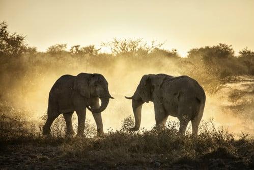 Afrika-Reisen-Pirschfahrten