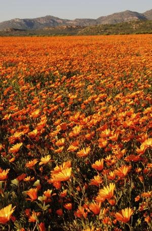 Namaqualand - Südafrika Reise - deutschsprachige Reiseleitung