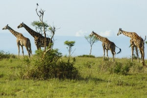 Murchison Falls Nationalpark Uganda Safari