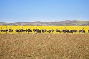 Südafrika-Safaris vor Ort buchen