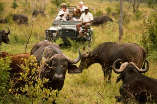 Afrika geführte Gruppenreise - Game Drive