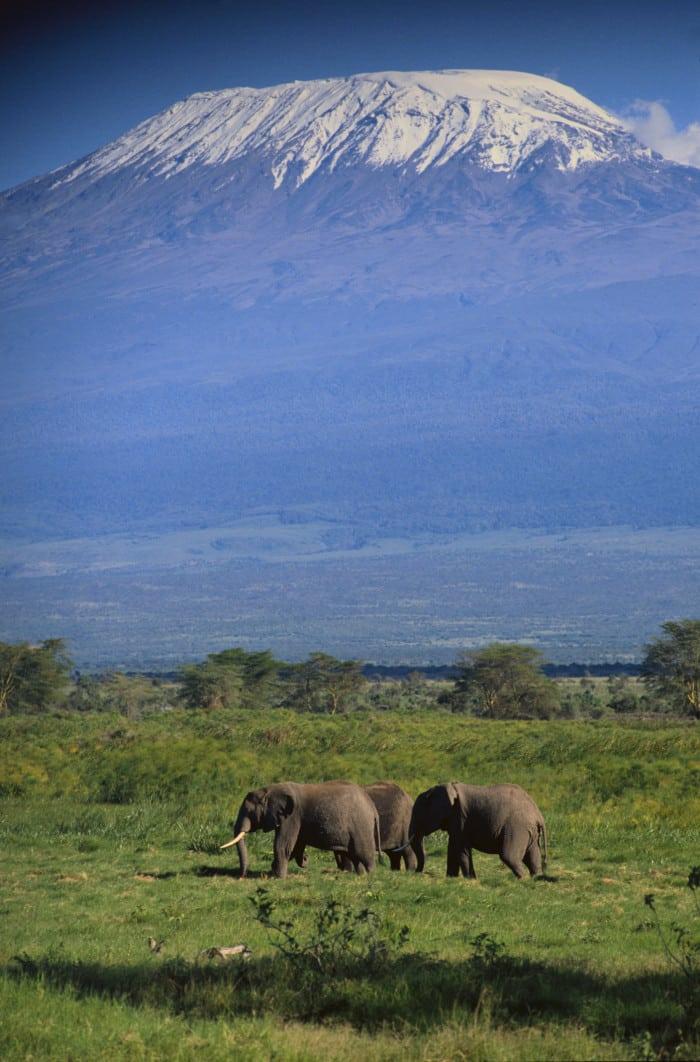Afrika Safari Reisen - Kilimanjaro Besteigung