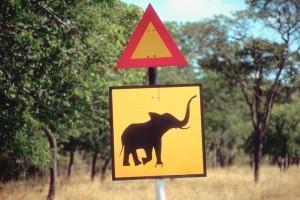 Simbabwe Safaris - Elefanten Pirschfahrten