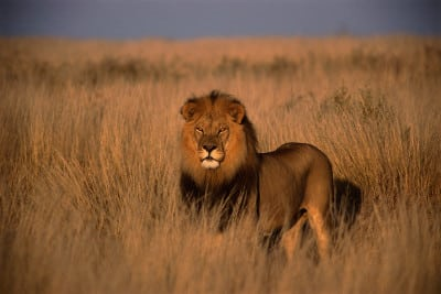 Südafrika Safari Reisen - geführte Fusspirsch
