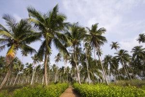 Sao Tome Reisen online buchen
