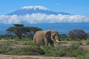 Reisen in Kenia günstig buchen