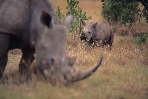 Rundreisen durch Kenia