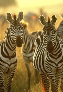 Reisen mit Safari in Kenia