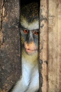 Rundreisen auf Sao Tome und Principe