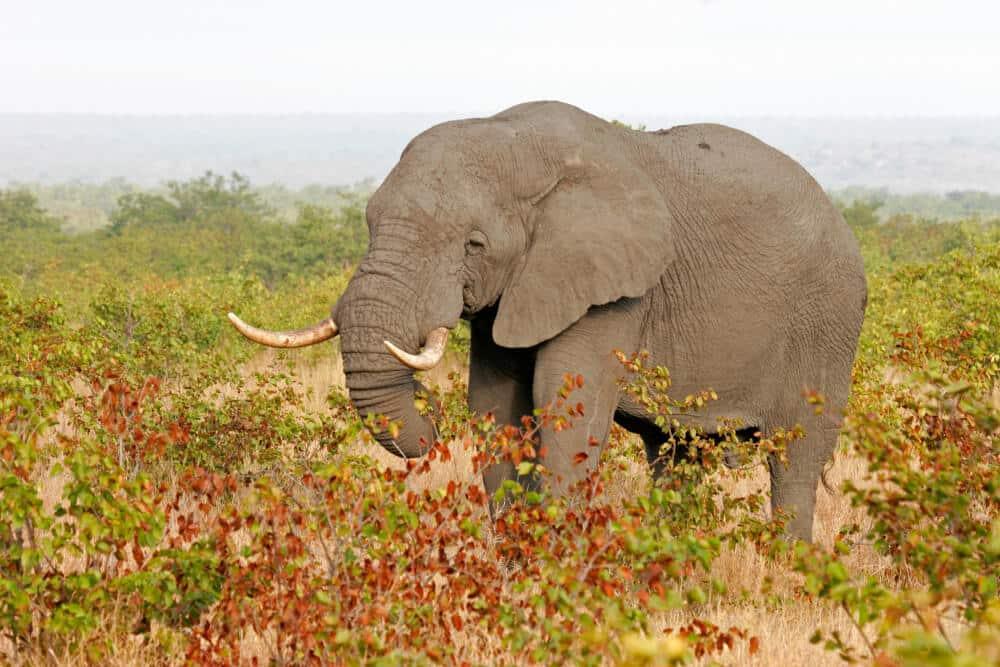 Südafrika Naturreisen