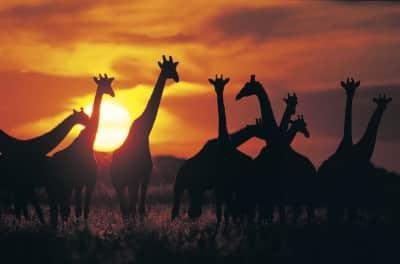 Sonnenuntergang - Safari Reise Afrika