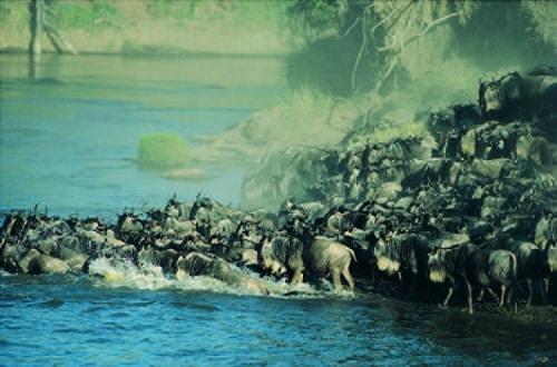 Tiermigration - Kenia - Tansania Tierwanderung