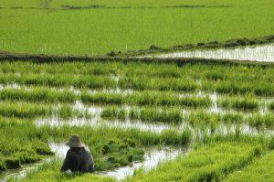 myanmarr-erlebnisreise-in-alte-koenigsstaedte-Burmas