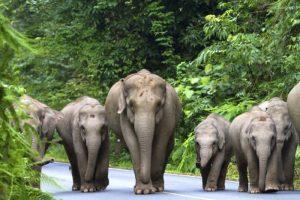thailand-reisen-rundreisen-urlaub-in-thailand