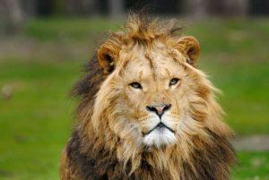 Afrika Safari - Big 5