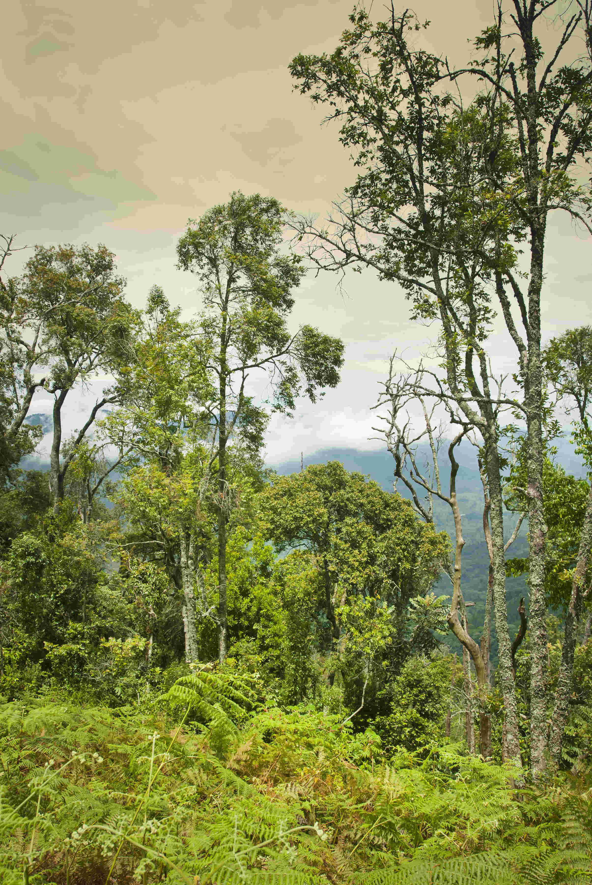 Ruanda Reisen – Nyungwe Nationalpark und der Regenwaldspaziergang