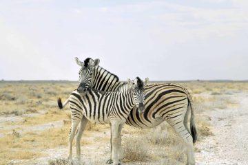 Namibia mit Kindern – Safari und Selbstfahrerreise als Familie