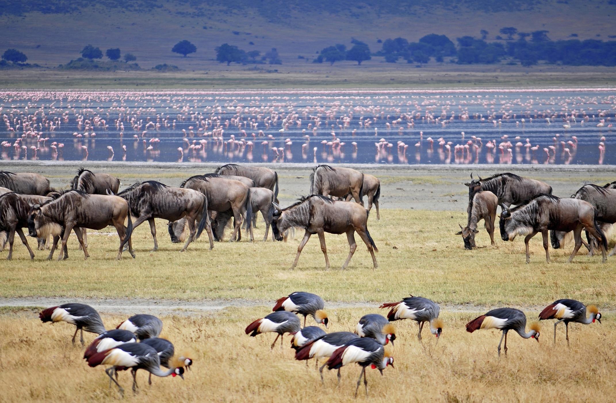 Reiseberichte- Tansania - Erfahrungsberichte - Safari Tipps und Urlaubsberichte - Tanzania