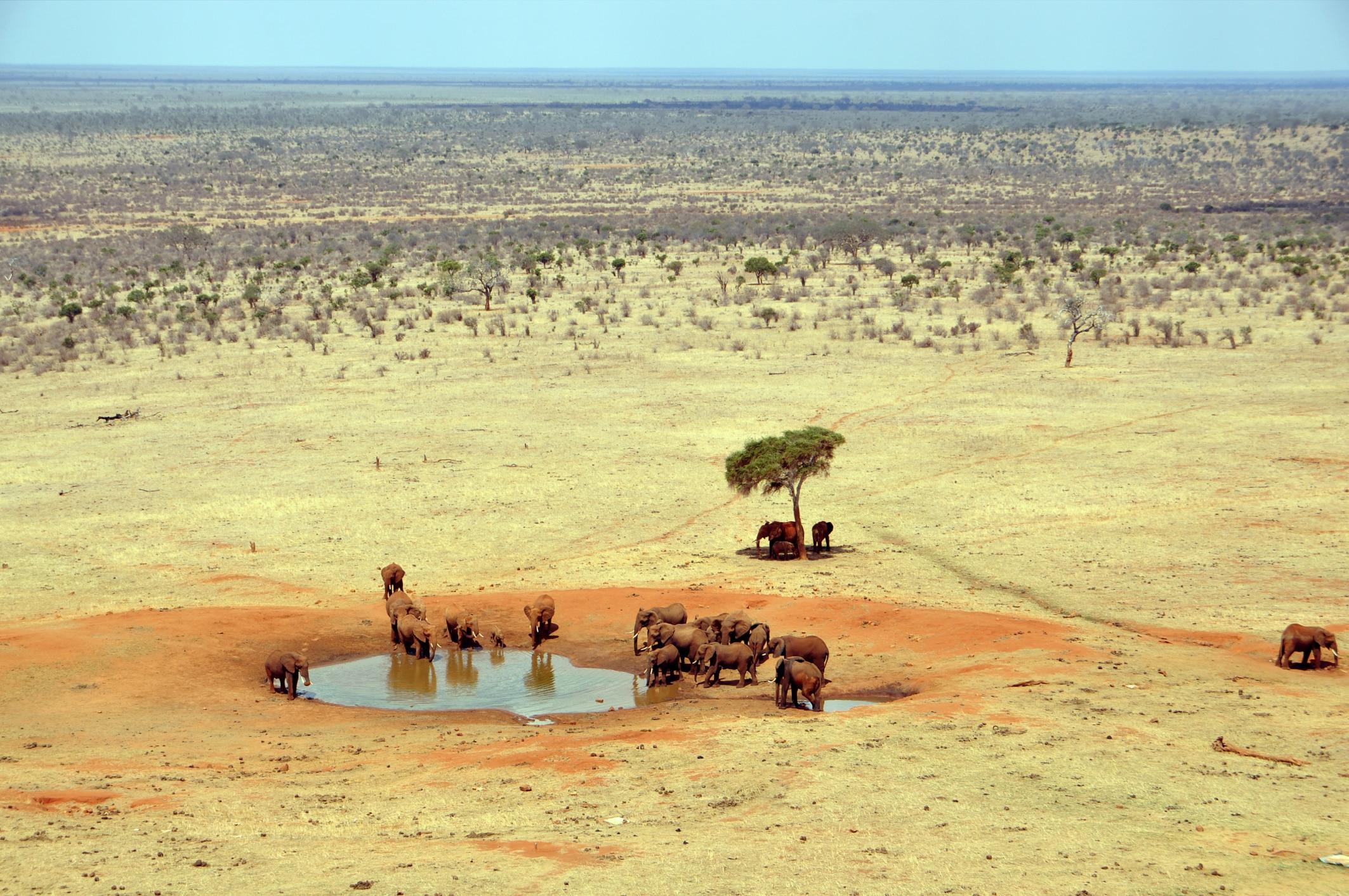 Tsavo Ost Nationalpark - Safari