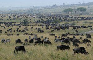 Masai Mara - Kenia Reisen für Tierliebhaber
