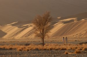 Wandern auf dem Tok Tokie Trail - Namibia