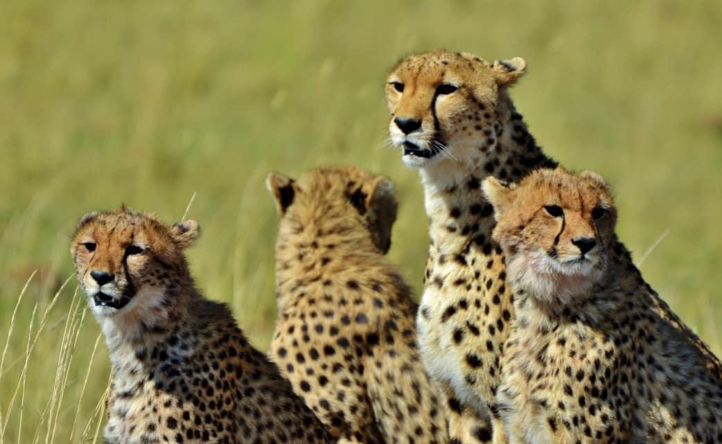 Individualreisen Kenia - Safari