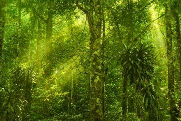 Reisen durch Malaysia - Naturschutz unterstützen