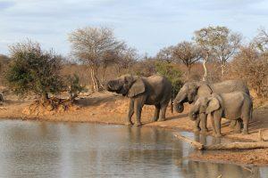 Südafrika-Safaribericht - Krüger Nationalpark