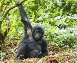 Wohin nach Afrika reisen - Ruanda
