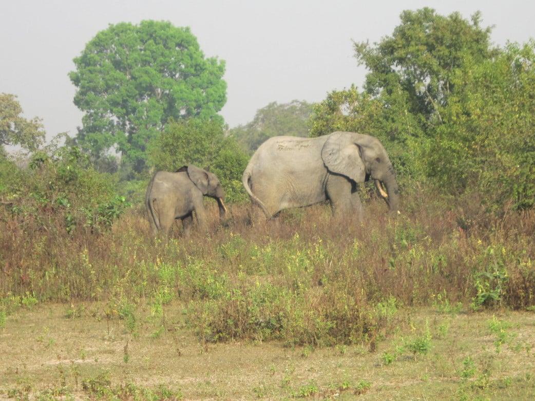 Ghana Rundreise - Mole National Park