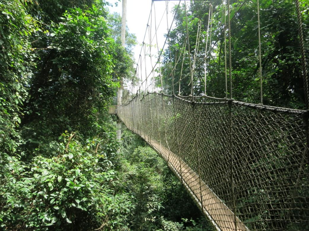 Canopy Walk - Kakum Nationalpark - Ghana Rundreise