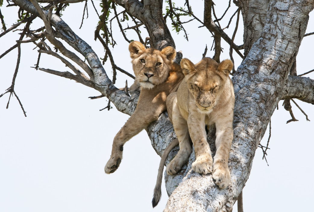 Uganda Gruppenreise mit Natürlich Reisen