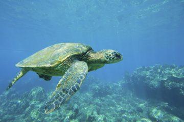 Schutz von Meeresschildkröten in Kap Verde