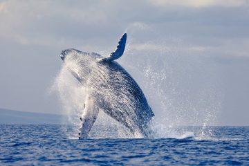 Walbeobachtung Sao Tome - Afrika
