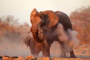 Namibia - Reisen - Elefant